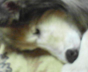 お鼻が…(i163)�U